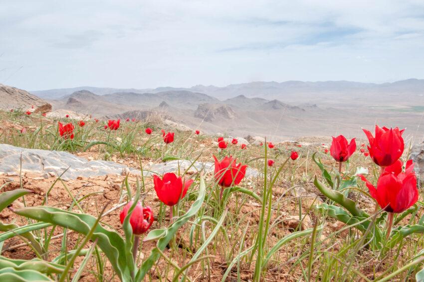 Persian Spring